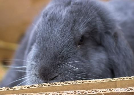 How to make rabbit toys without leaving home (Using Toys for gnawing and tearing)