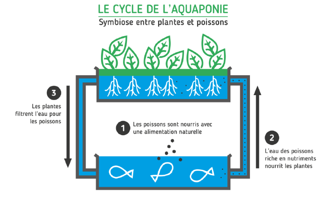 Le Cycle de l'aquaponie, Save Our Agriculture