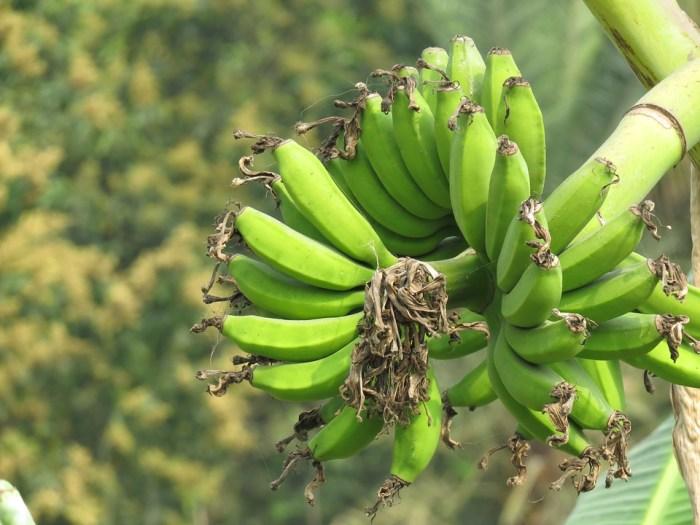 Banana, Banana Verde, Verde, Frutas, Frescos, Saudável