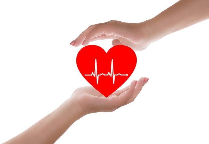 Heart, Heart Care, Heart Health, Doctor, Care, Medical