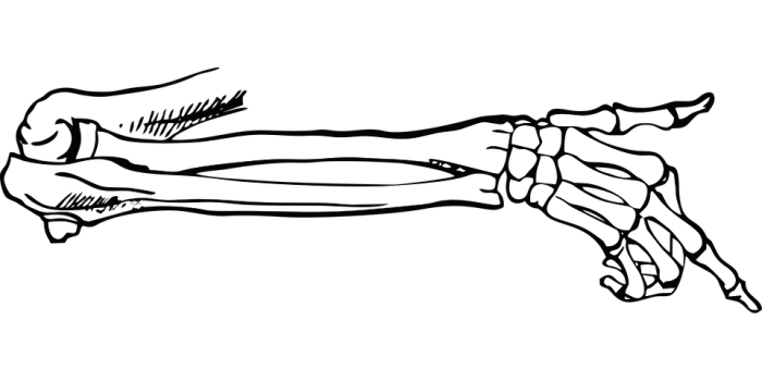 Bones, Skeleton, Point, Body, Vector, Free Vector