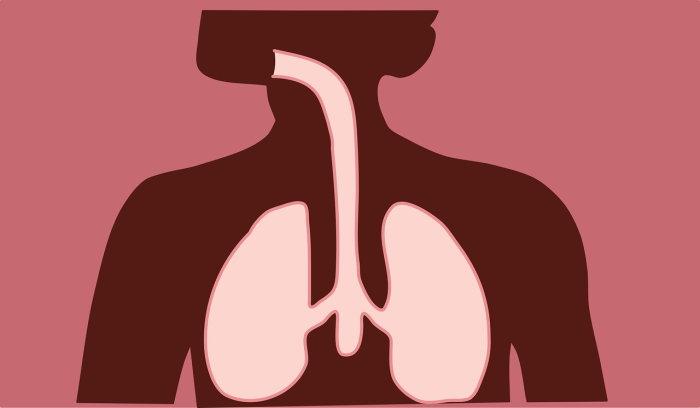 C:\Users\Zubair\Downloads\respiratory-system-4869736_1280.png