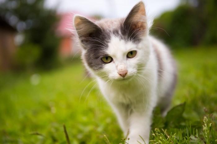 C:\Users\Zubair\Downloads\animal-blur-cat-face-close-up-533088.jpg