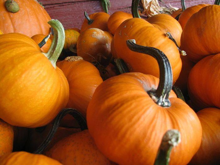 File:Pumpkins 1.JPG
