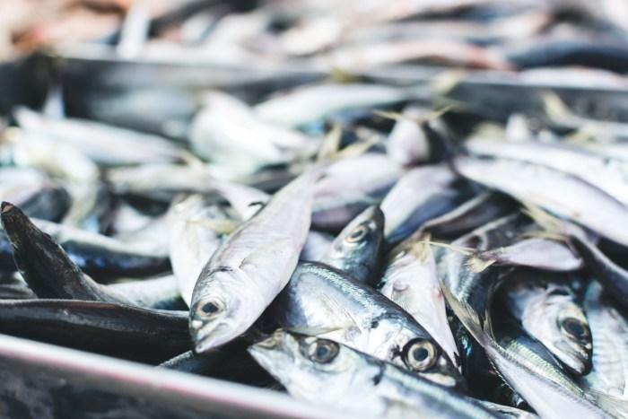 C:\Users\Zubair\Downloads\fish-sardine-fish-products-herring-oily-fish-forage-fish-1629422-pxhere.com.jpg