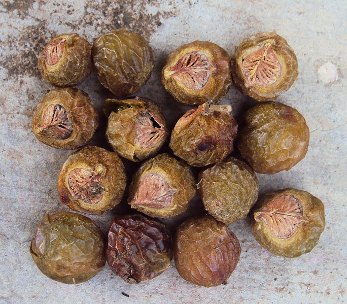 File:Sapindus trifoliatus 15.jpg