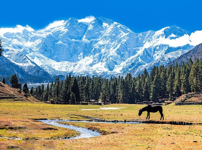File:Fairy Meadows and the view of Nanga Parbat.jpg