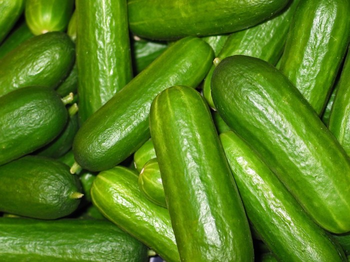 C:\Users\Zubair\Downloads\cucumbers-2446470_1920.jpg