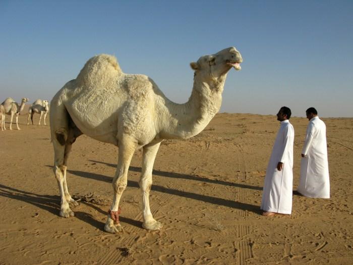 C:\Users\Zubair\Downloads\saudi-arabia-95500_1920.jpg