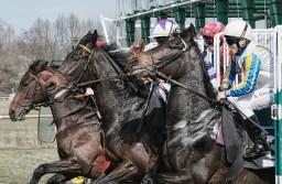 El jeque que ha gastado 700 millones de euros para ganar una carrera de caballos