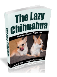 The Lazy Chihuahua