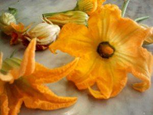 flor de calabacin, calabacin