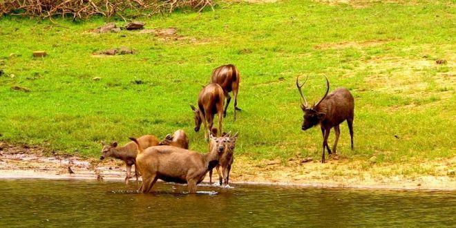 Parque Nacional Periyar