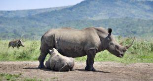 Rinoceronte en Sudafrica