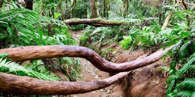Sendero de El Bosque Encantado