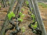 Balade en Vignes