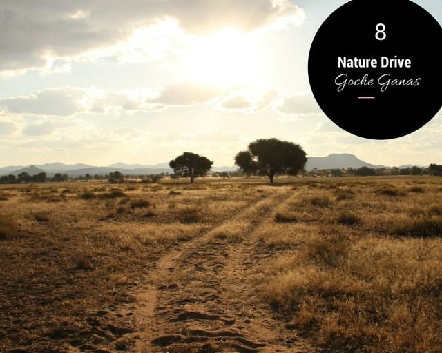 nature drive en namibie