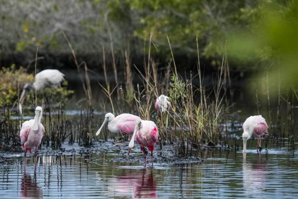 florida outdoor wildlife