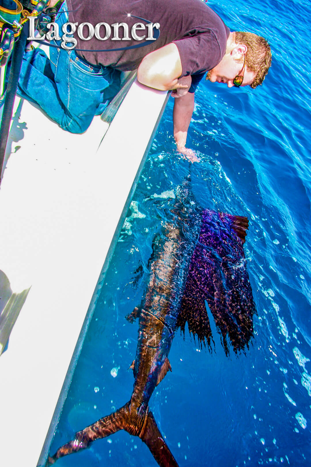 sailfish caught offshore