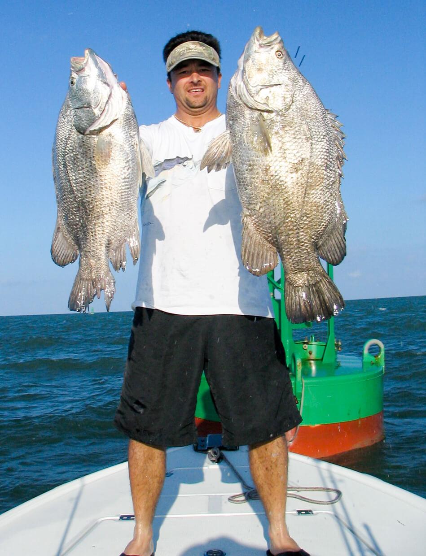 triple tail, buoy bass