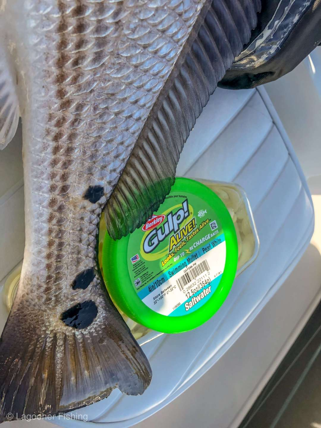 Indian River Fishing Report