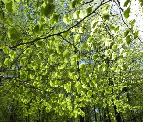 ...bedövande grön och skön!