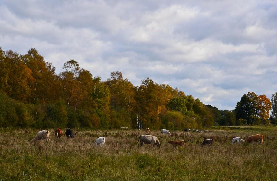 ...love rural landscapes!