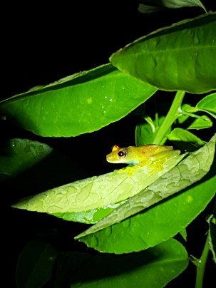 Tree frog - adorable!