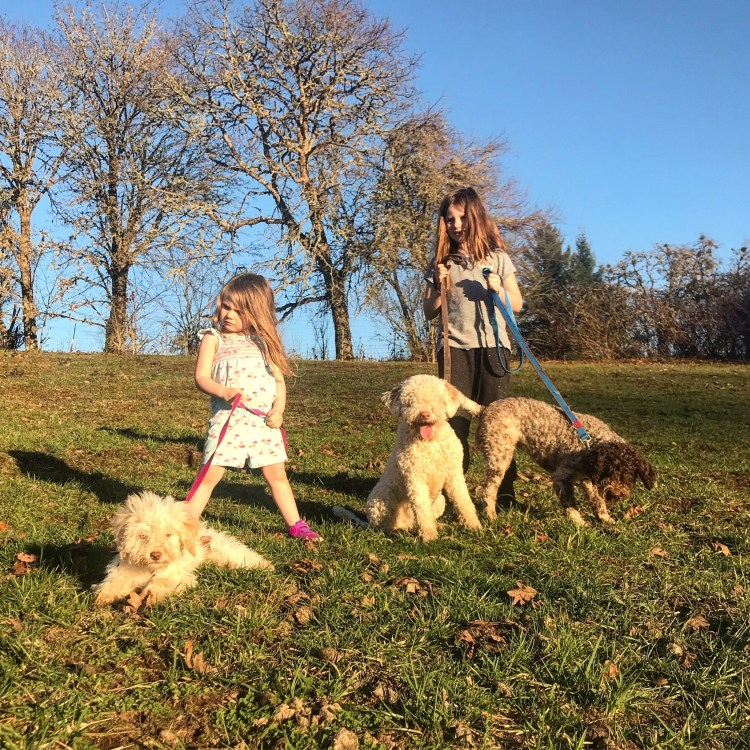 Amico Roma Puppies two kids holding their three young Lagotto dogs on leashes in a grassy field