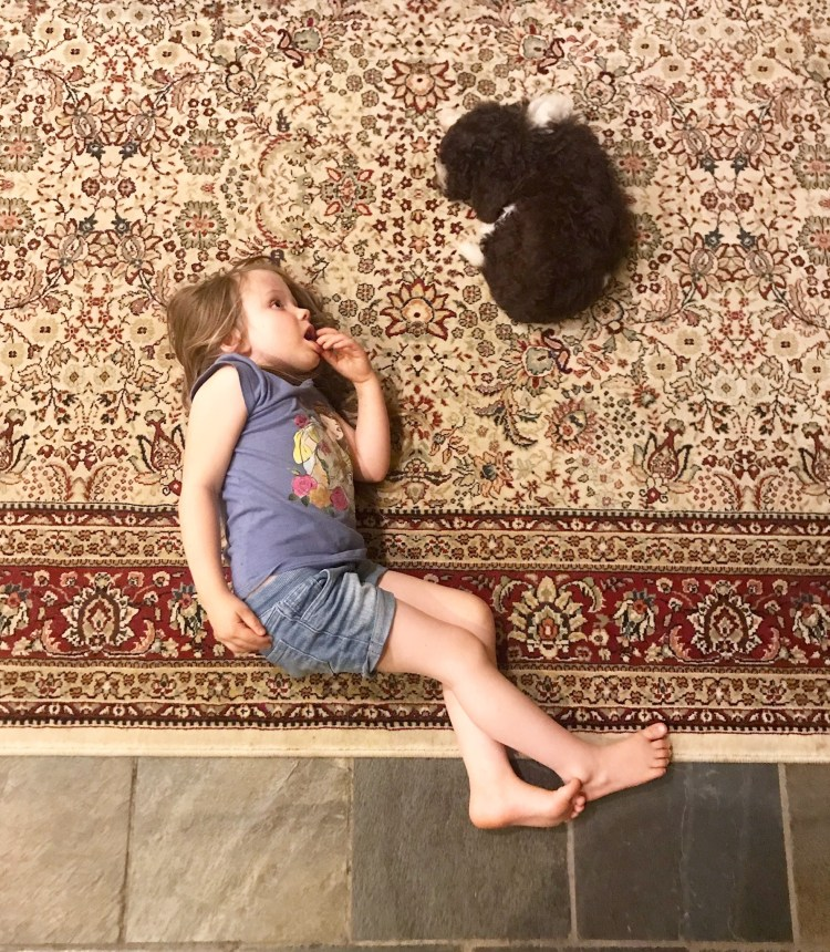 One of amico roma puppies young daughters laying on the family's area rug inside with a small brown and white lagotto puppy