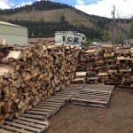 Saturday is Woodlot Day