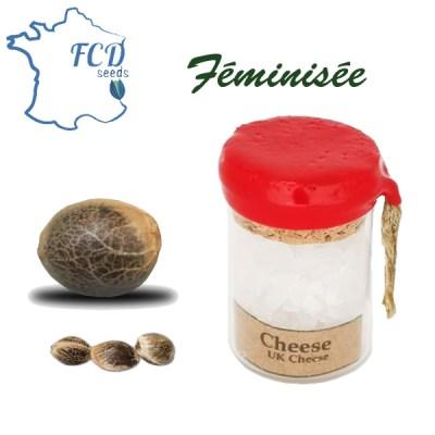 Graines de collection Cheese feminisée