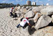 La recolección se realizó frente a la playa del Malecón en Riohacha.