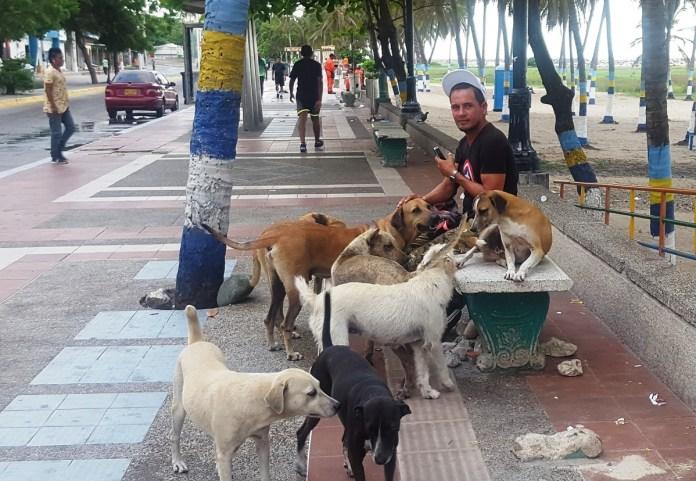 Los protectores de perros, siempre están atentos de los animales que se encuentran por el Centro de la ciudad.