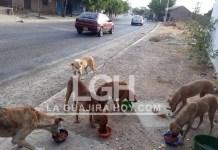 El grupo de perros se hallan en la vía principal de Papayal