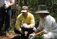 200 mil árboles durante los tres meses que hacen falta, sembrará cerrejón, en las tierras que le fueron extraídas el mineral.