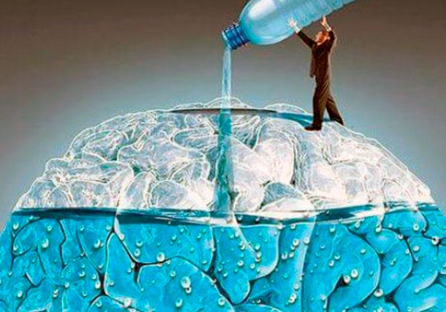 #Actualidades   Cerebro deshidratado requiere mayor esfuerzo para funcionar