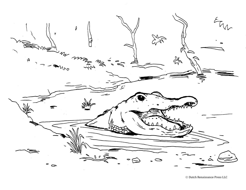Sélection de coloriage alligator à imprimer sur LaGuerche