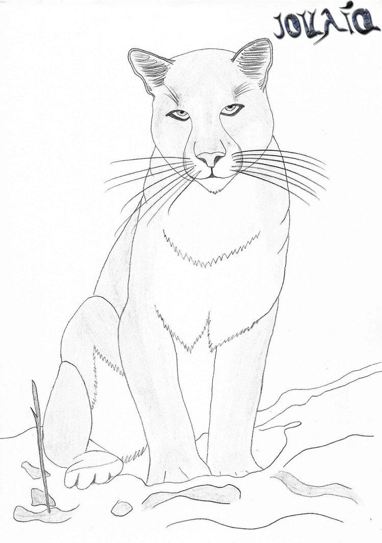 40 dessins de coloriage cougar à imprimer sur LaGuerche