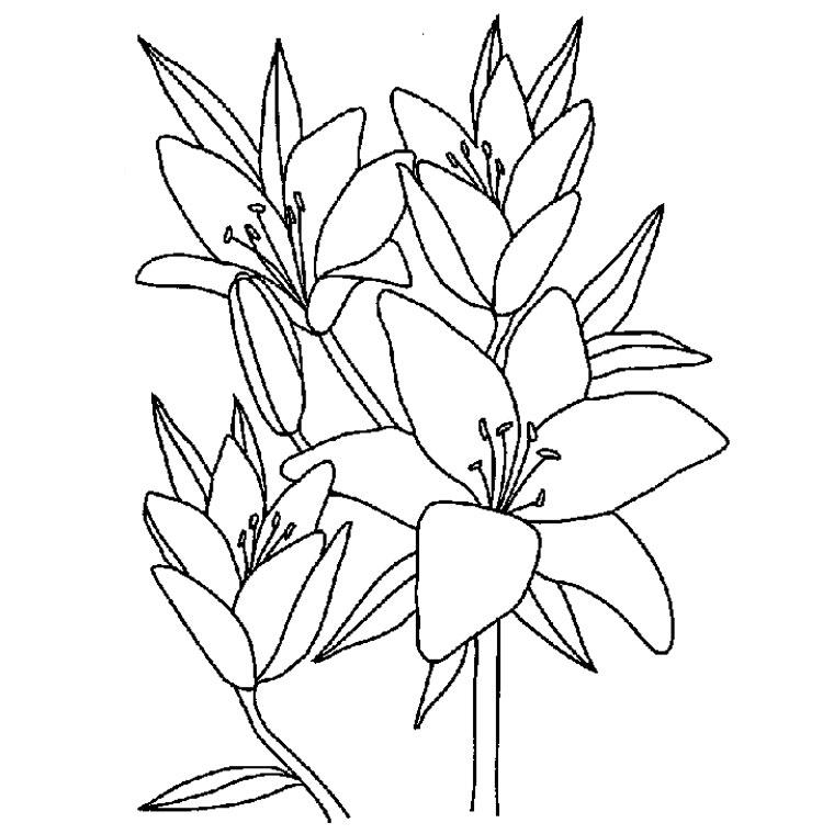 le coloriage fleur hawaienne pour imprimer le coloriage fleur
