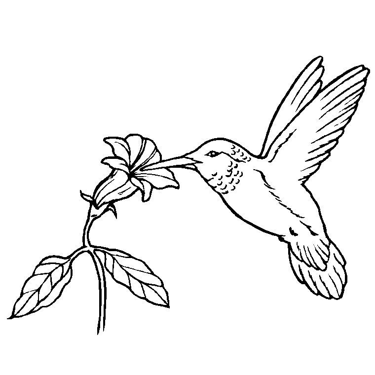 119 dessins de coloriage oiseau à imprimer sur LaGuerche