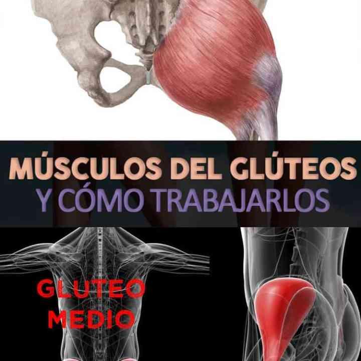 Músculos Del Glúteo: Anatomía Y Cómo Trabajarlos - Always in Health