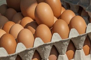 proveedores-horeca-huevos-hostelería-restauración