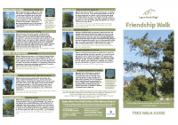 Friendship Tree Walk Guide 11×17″