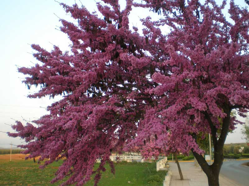 Abril de aguas y flores mil la habitaci n verde for Arboles y arbustos para jardin