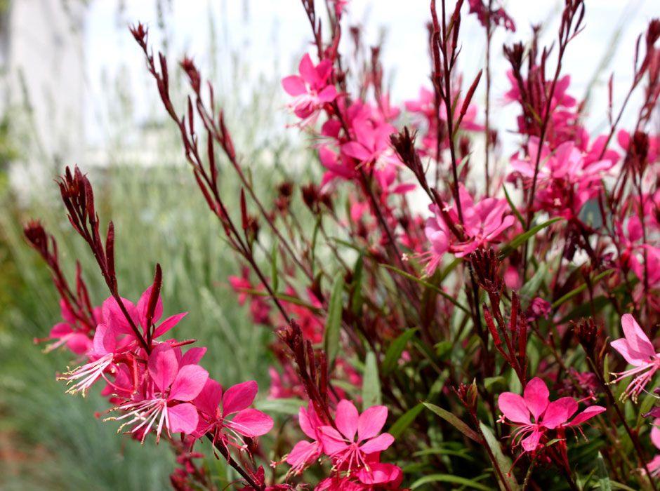 terraza en madrid flores