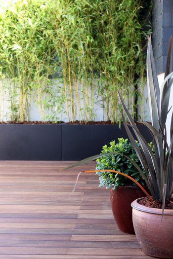 Terraza peque a con mucho encanto la habitaci n verde - Macetas con bambu decoracion ...