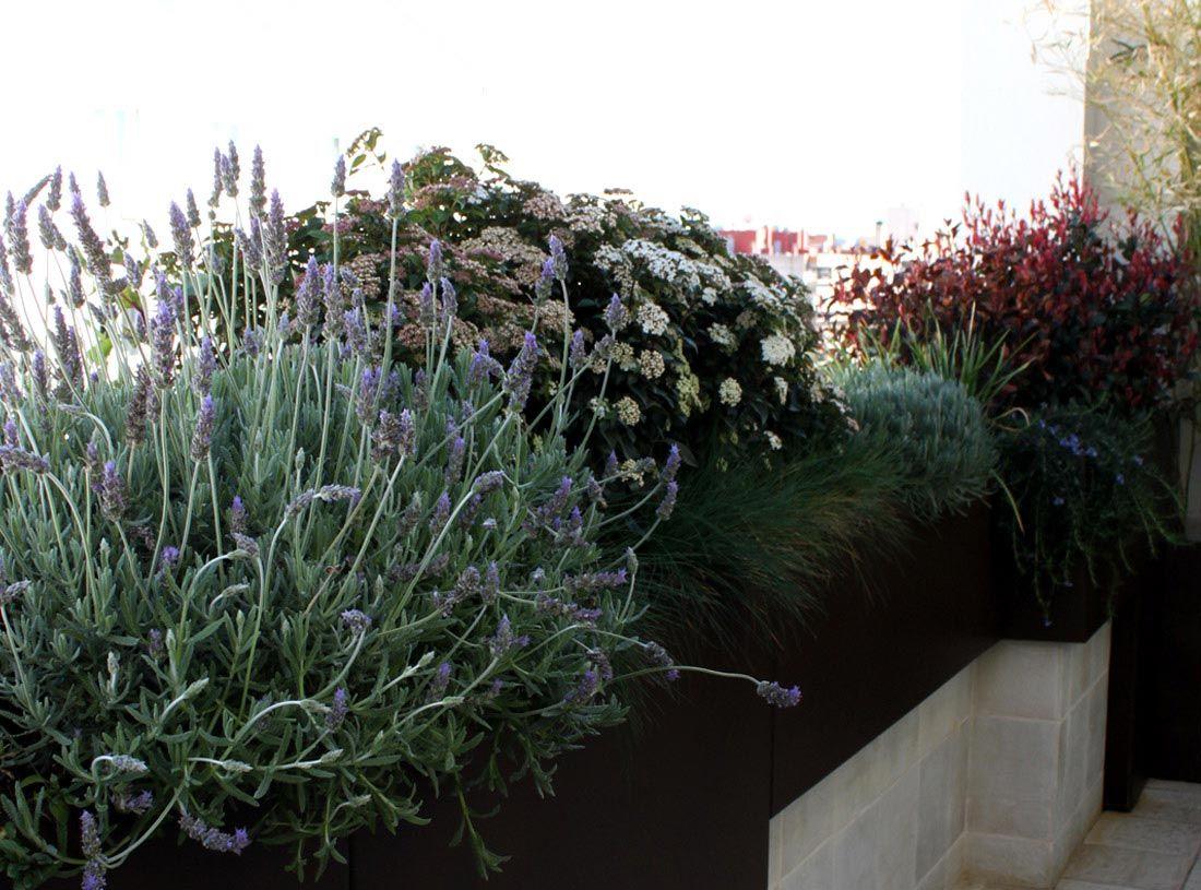 Las 9 mejores plantas para terrazas la habitaci n verde for Que plantas poner en una jardinera