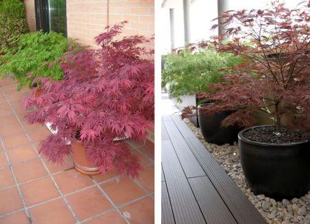 Diseño de jardín antes y después