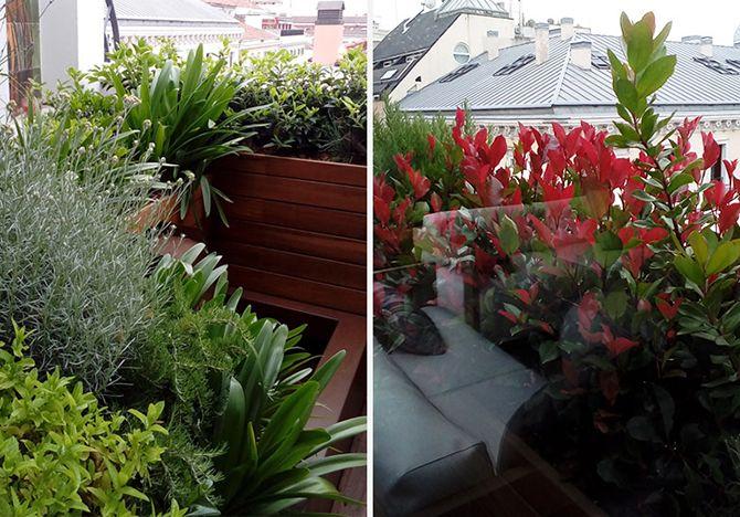 Casos de xito terraza con jard n vertical la - Jardin vertical terraza ...